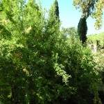 GIARDINI NINFA - ABBAZIA  VALVISCIOLO 16 ott. 2011 (30)