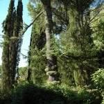 GIARDINI NINFA - ABBAZIA  VALVISCIOLO 16 ott. 2011 (44)